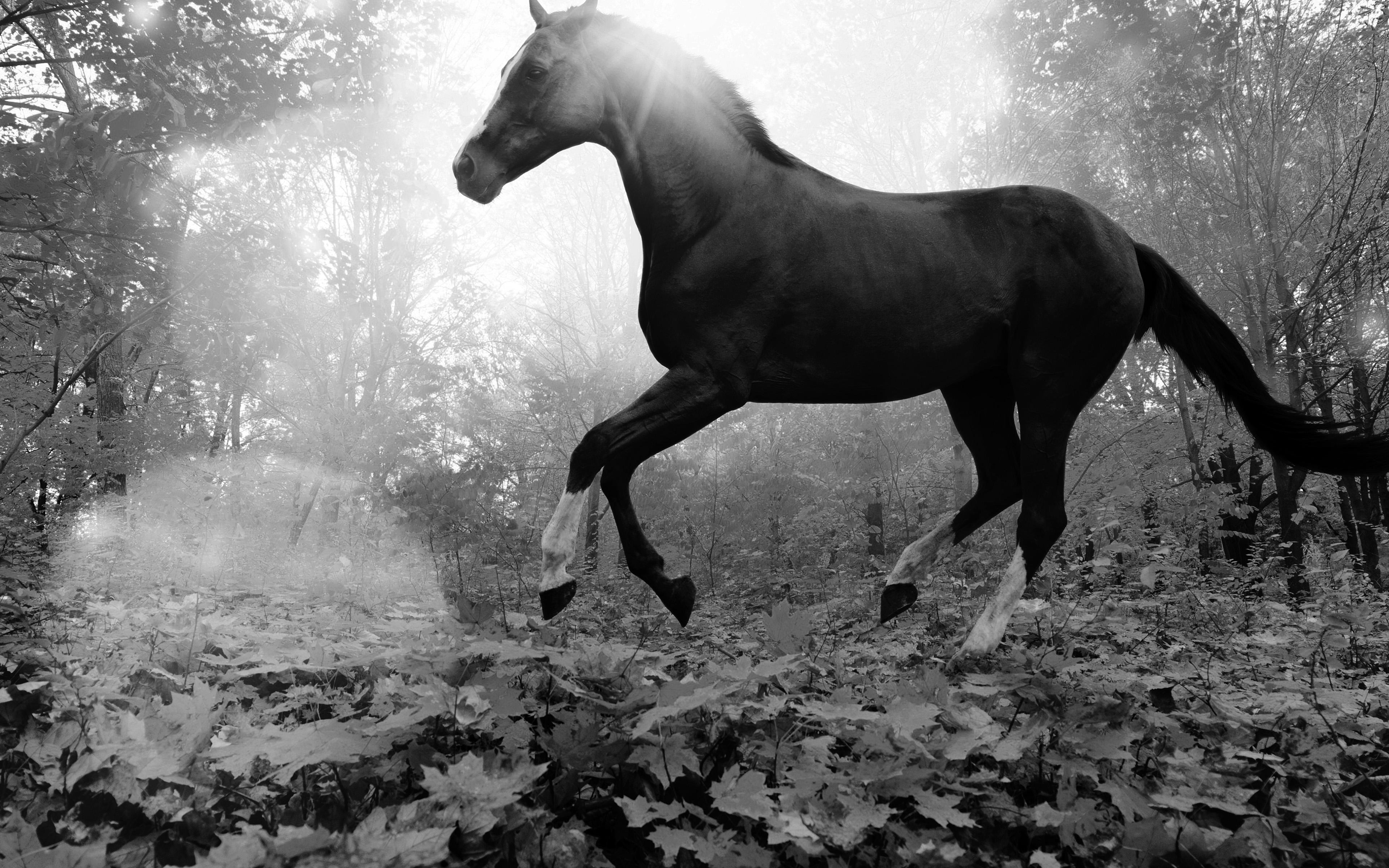 Wallpaper For Desktop Laptop Mt32 Horse Art Animal Fall Leaf Mountain Flare Dark Bw