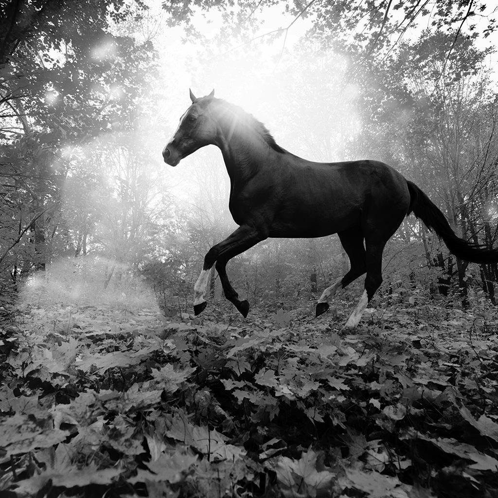Horses of the night essay