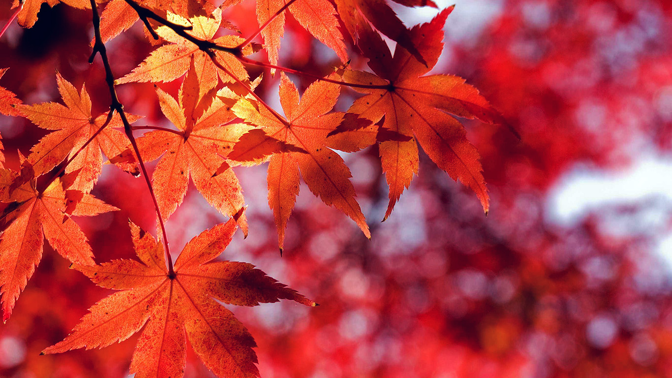 desktop-wallpaper-laptop-mac-macbook-air-mt33-fall-leaf-red-mountain-bokeh-wallpaper