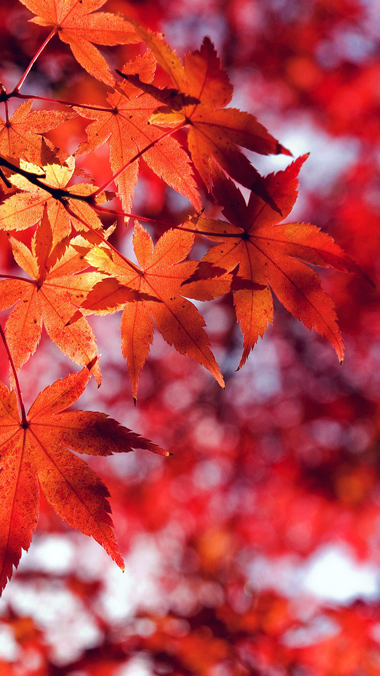 iPhone6papers.co-Apple-iPhone-6-iphone6-plus-wallpaper-mt33-fall-leaf-red-mountain-bokeh