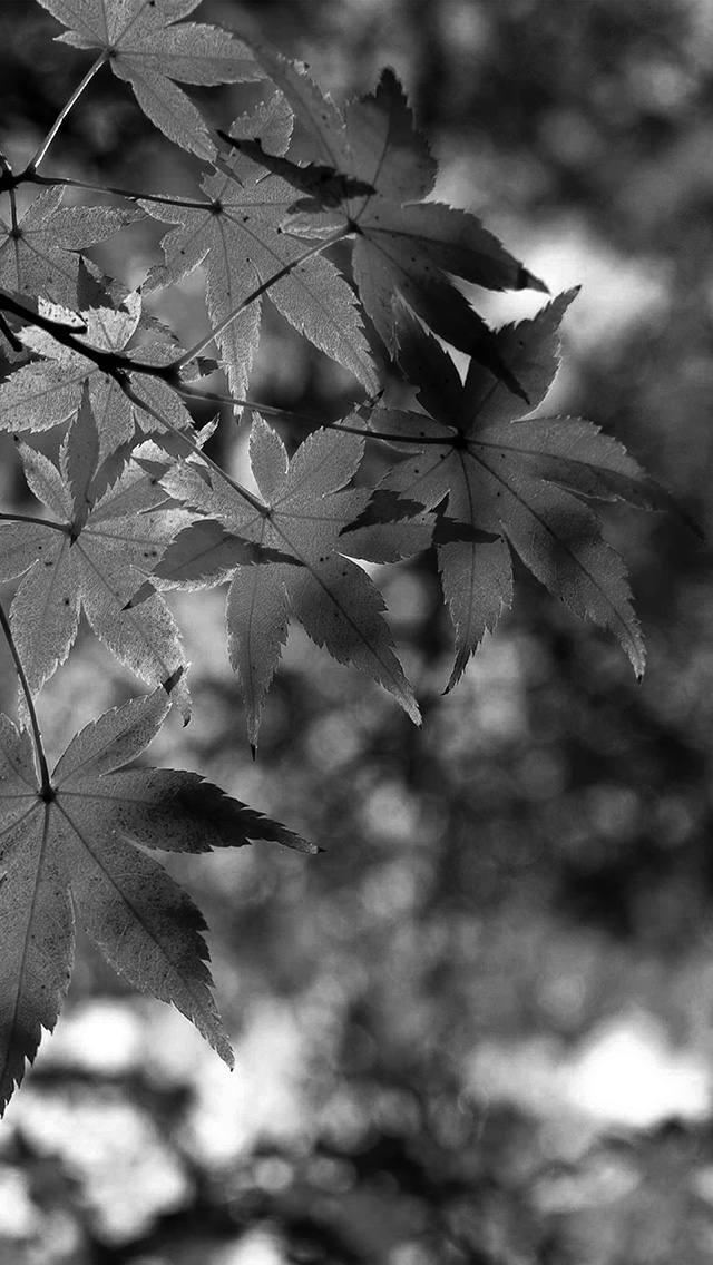 Freeios8 Com Iphone Wallpaper Mt34 Fall Leaf Dark Bw