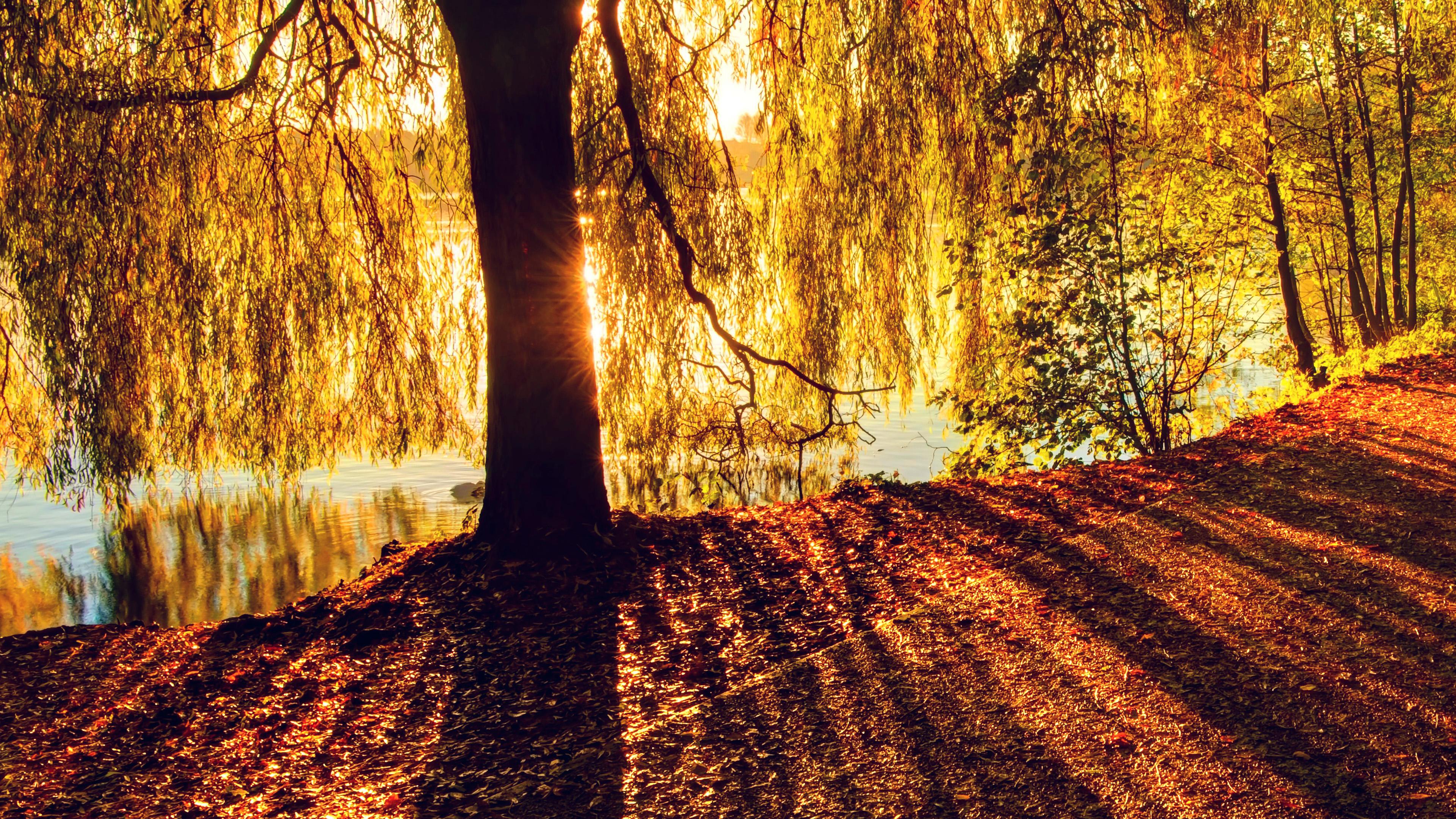 sunshine nature morning tree lake desktop mt35 2160 4k wallpapers papers 2400 macbook 2560 1080 1600 1920 december imac