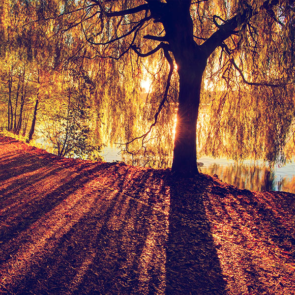 iPapers.co-Apple-iPhone-iPad-Macbook-iMac-wallpaper-mt36-morning-lake-tree-sunshine-nature-blue-wallpaper