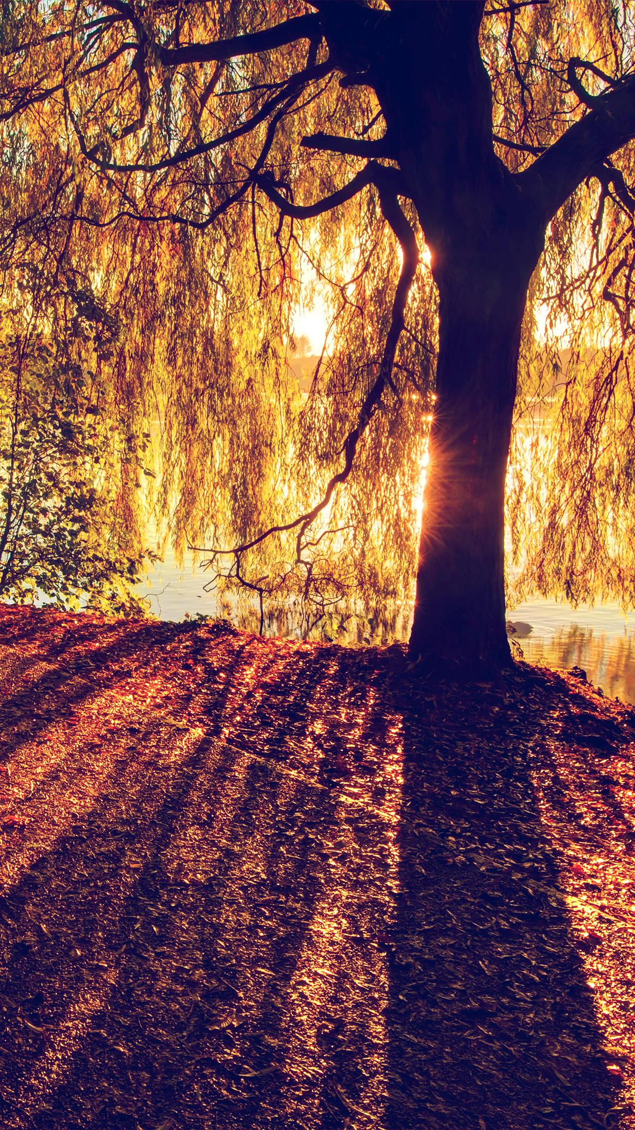 sunshine nature tree morning lake iphone mt36 plus wallpapers papers pro se