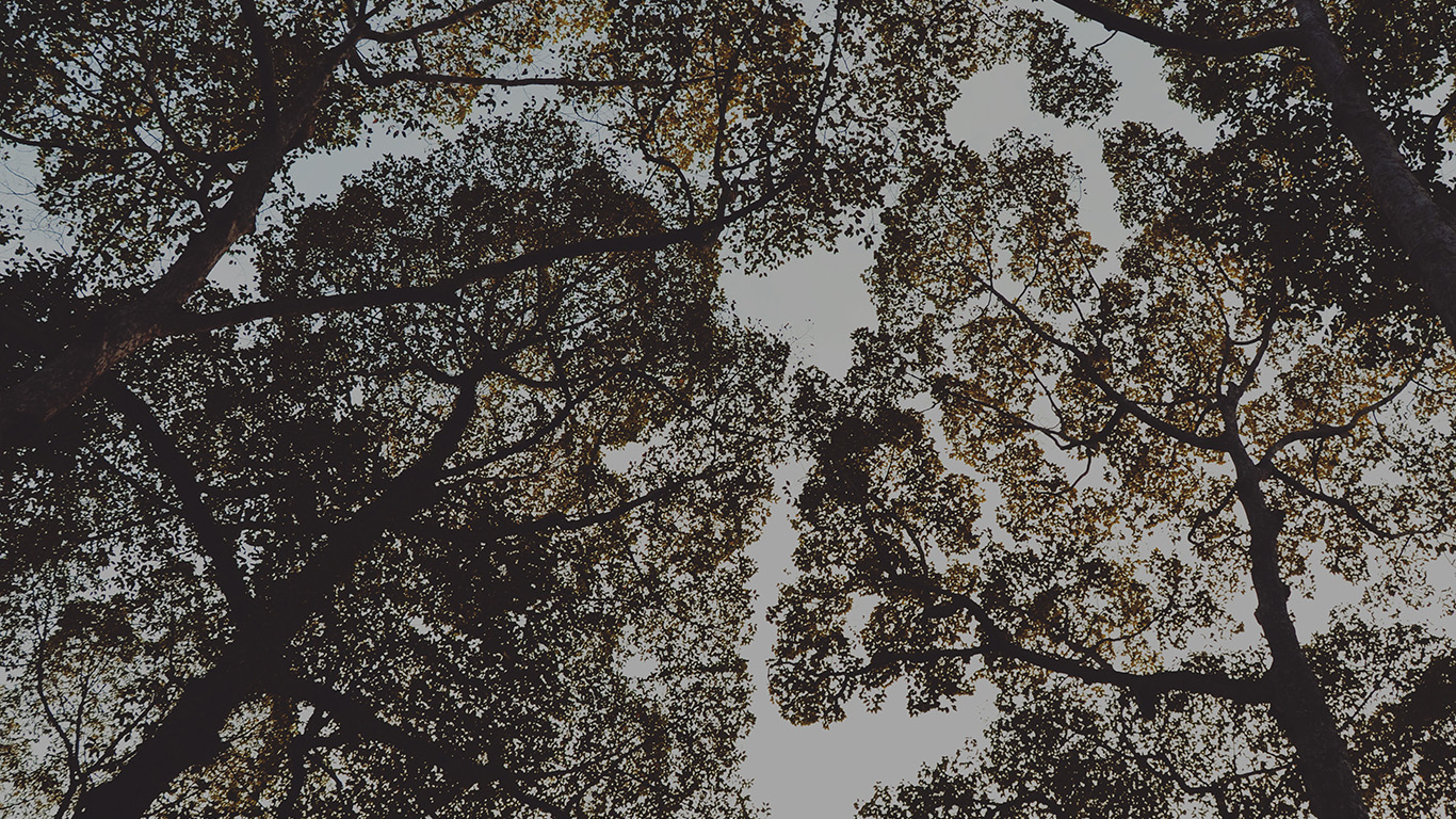 desktop-wallpaper-laptop-mac-macbook-airmt37-tree-shadow-sky-nature-night-wallpaper