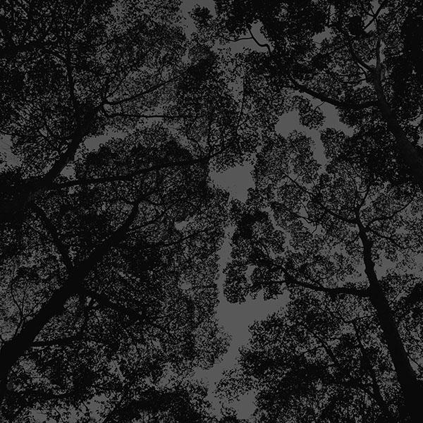 iPapers.co-Apple-iPhone-iPad-Macbook-iMac-wallpaper-mt38-tree-shadow-sky-nature-night-dark-wallpaper