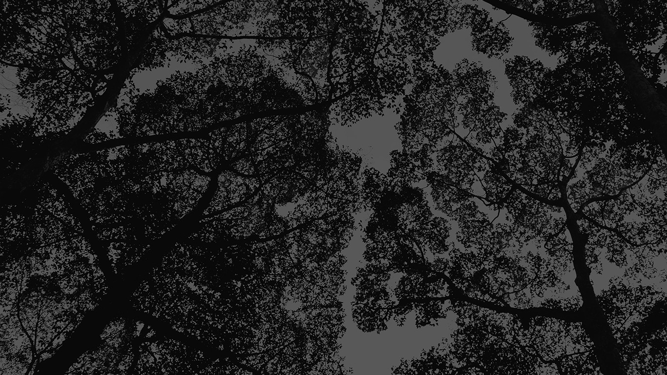 desktop-wallpaper-laptop-mac-macbook-air-mt38-tree-shadow-sky-nature-night-dark-wallpaper