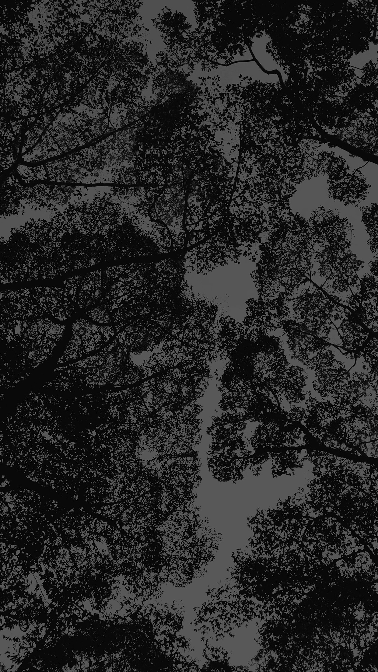 Mt38 Tree Shadow Sky Nature Night Dark Wallpaper
