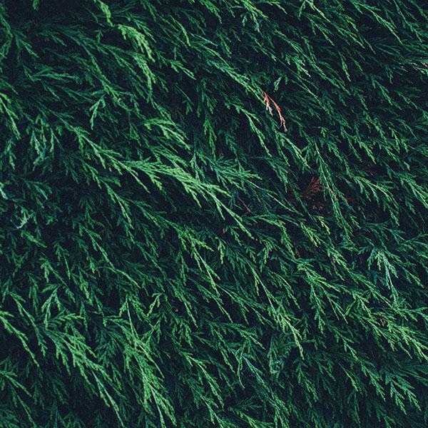 iPapers.co-Apple-iPhone-iPad-Macbook-iMac-wallpaper-mt40-tree-green-leaf-summer-pattern-nature-mountain-wallpaper