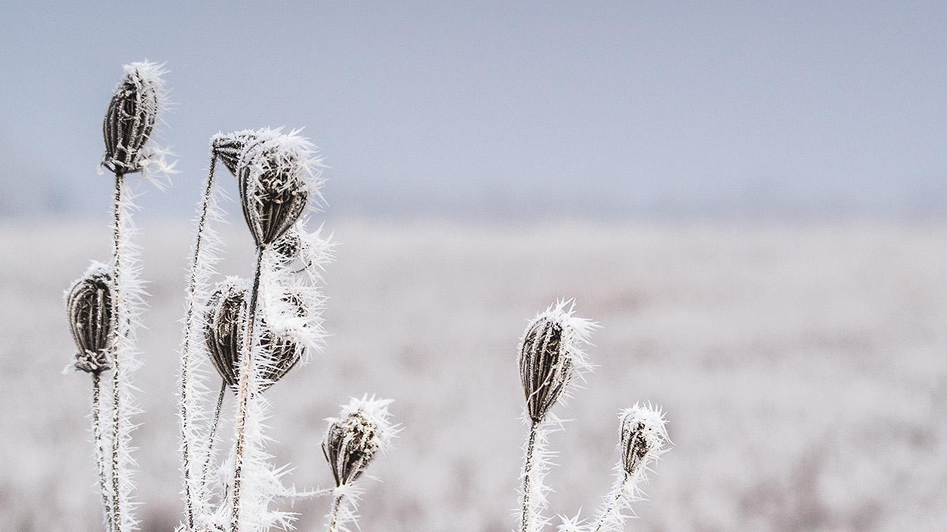 desktop-wallpaper-laptop-mac-macbook-air-mt46-snow-winter-flower-bokeh-nature-wallpaper