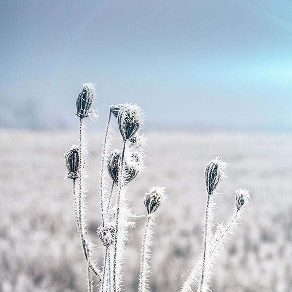 iPapers.co-Apple-iPhone-iPad-Macbook-iMac-wallpaper-mt47-snow-cold-winter-flower-bokeh-nature-flare-wallpaper