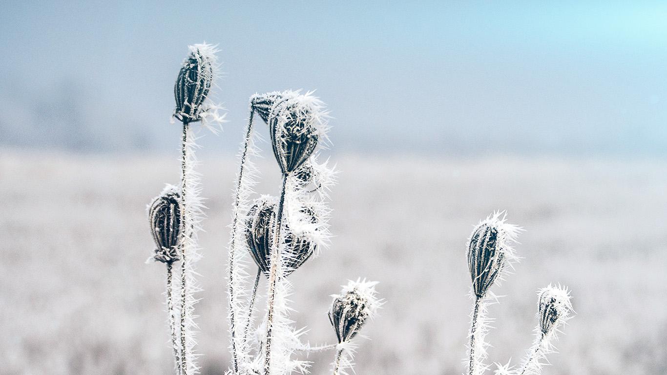 desktop-wallpaper-laptop-mac-macbook-air-mt47-snow-cold-winter-flower-bokeh-nature-flare-wallpaper