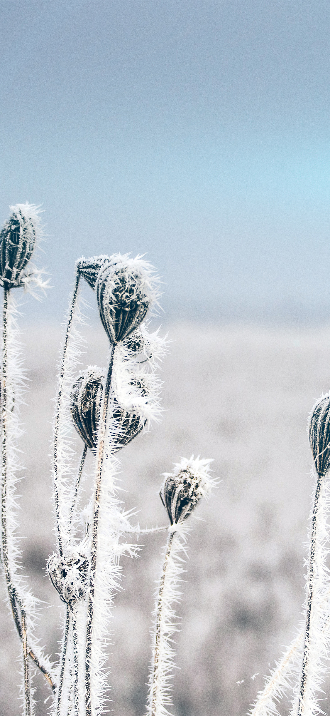 iPhonexpapers.com-Apple-iPhone-wallpaper-mt47-snow-cold-winter-flower-bokeh-nature-flare