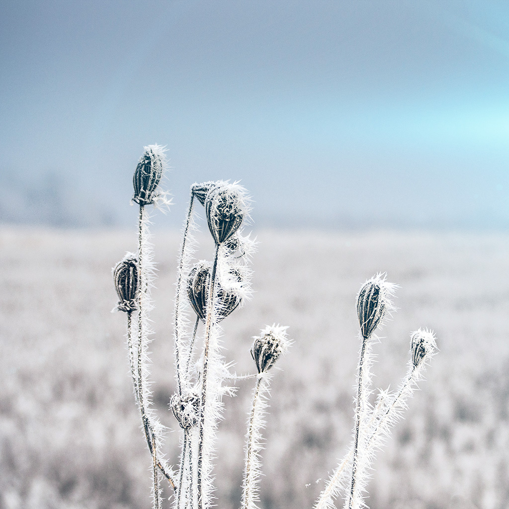 android-wallpaper-mt47-snow-cold-winter-flower-bokeh-nature-flare-wallpaper
