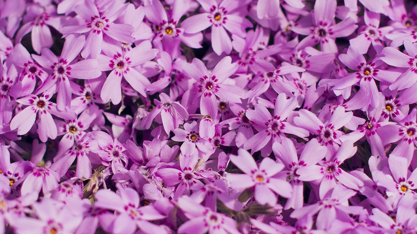 desktop-wallpaper-laptop-mac-macbook-airmt47-violet-flower-nature-party-spring-blossom-wallpaper