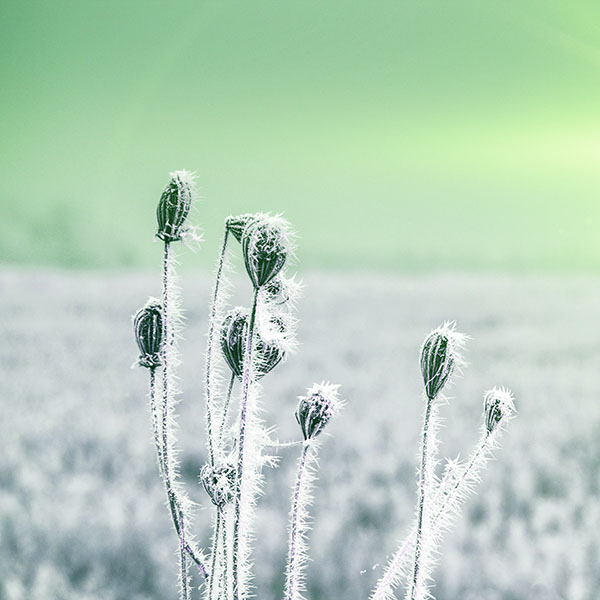 iPapers.co-Apple-iPhone-iPad-Macbook-iMac-wallpaper-mt48-snow-cold-winter-flower-bokeh-nature-flare-green-wallpaper