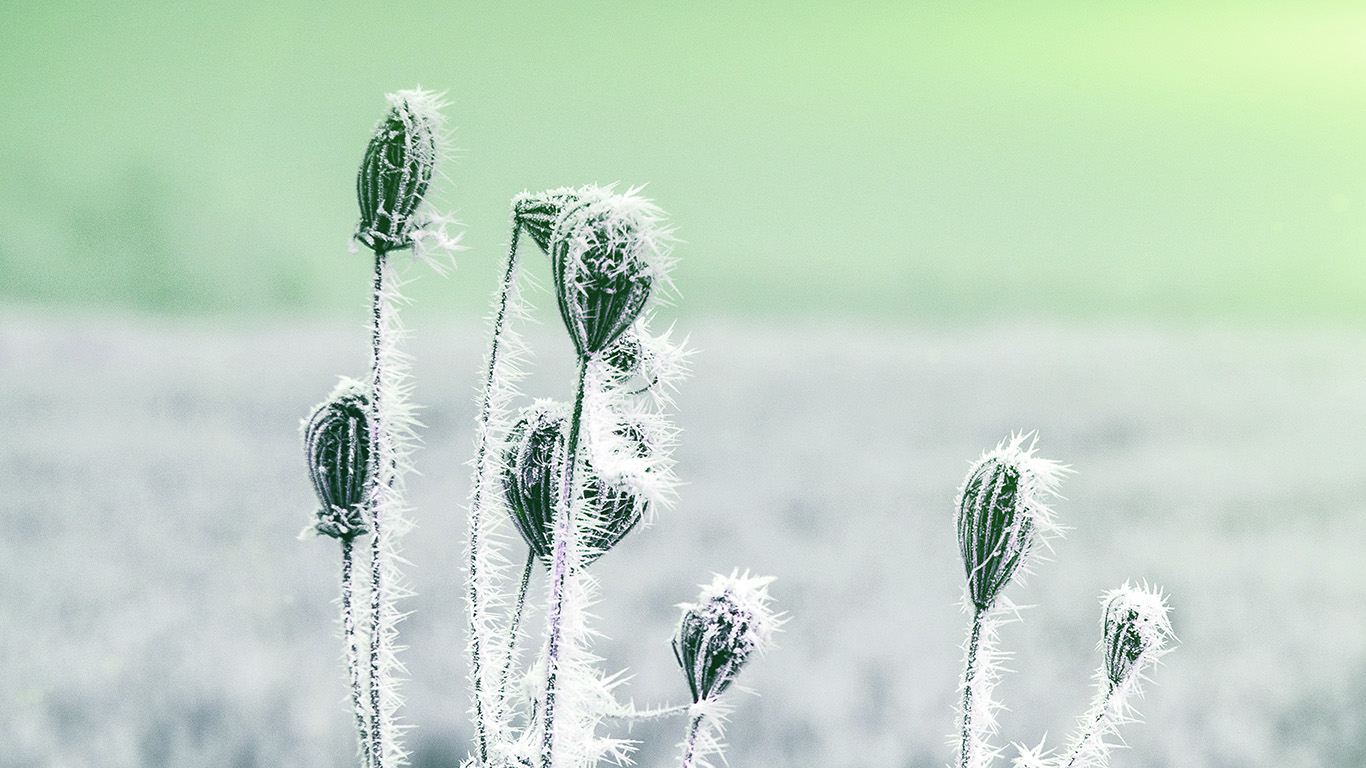 wallpaper-desktop-laptop-mac-macbook-mt48-snow-cold-winter-flower-bokeh-nature-flare-green