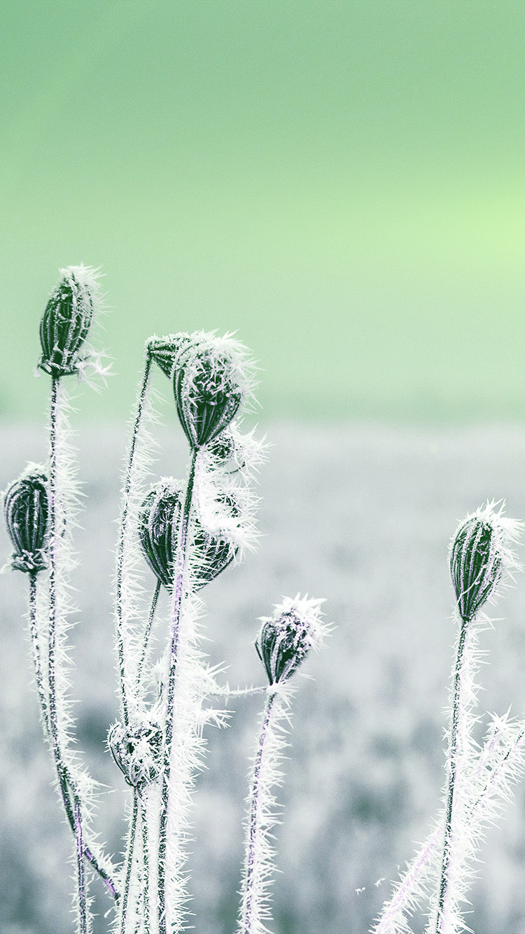 iPhone7papers.com-Apple-iPhone7-iphone7plus-wallpaper-mt48-snow-cold-winter-flower-bokeh-nature-flare-green