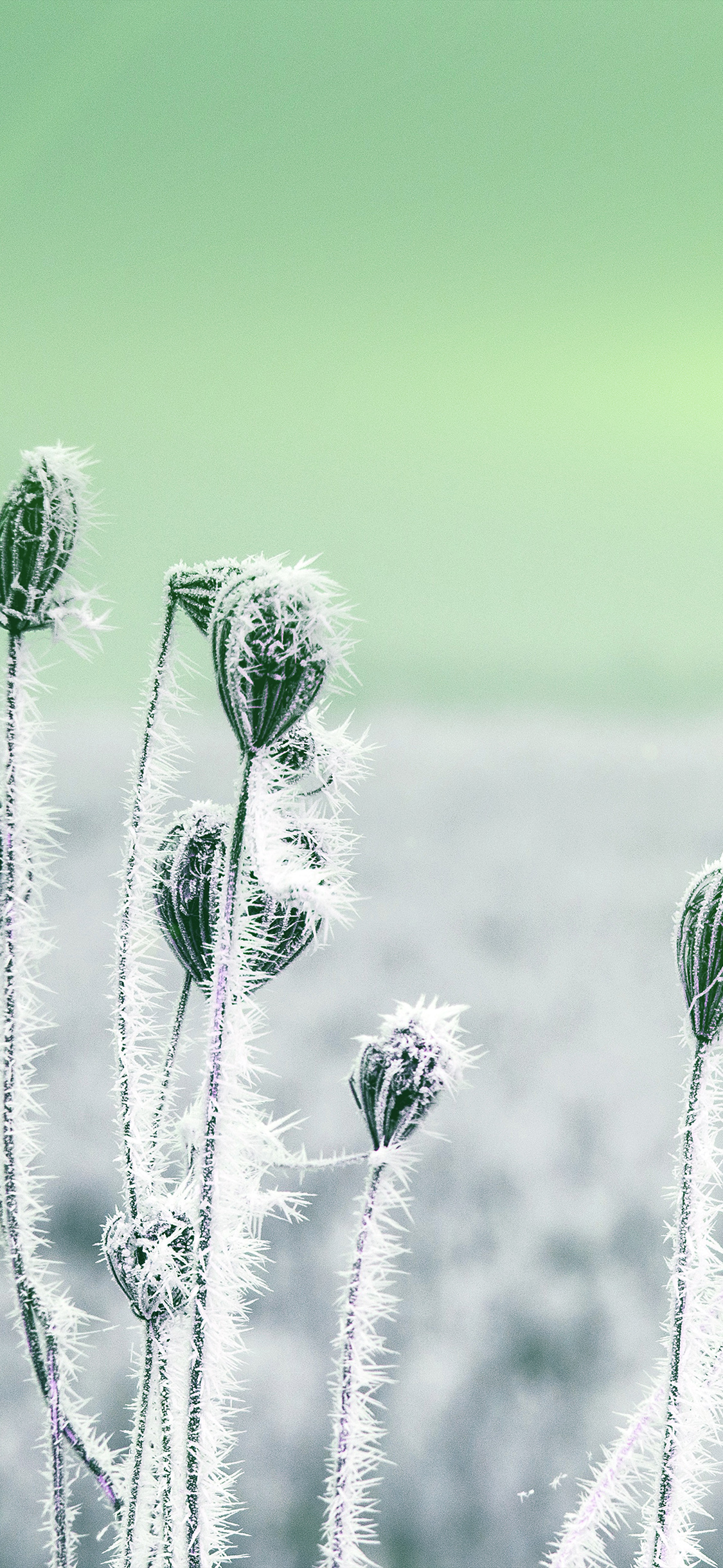 iPhoneXpapers.com-Apple-iPhone-wallpaper-mt48-snow-cold-winter-flower-bokeh-nature-flare-green