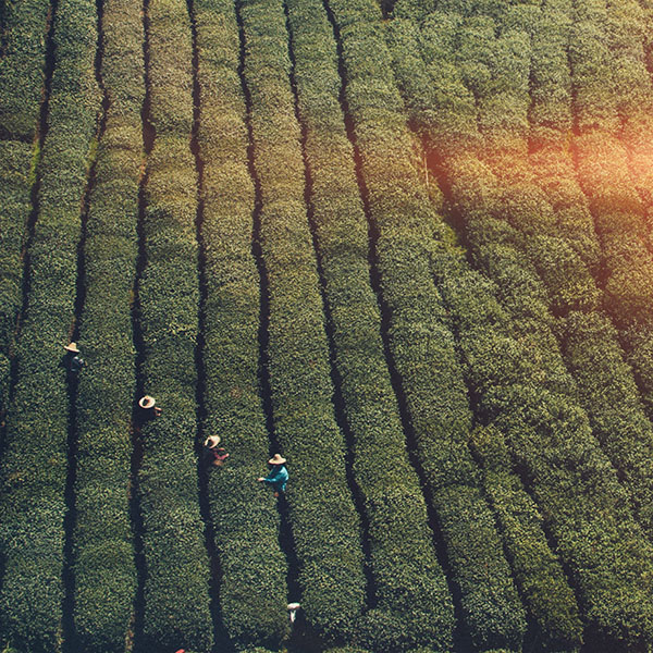 iPapers.co-Apple-iPhone-iPad-Macbook-iMac-wallpaper-mt60-farmer-green-nature-field-mountain-flare-wallpaper