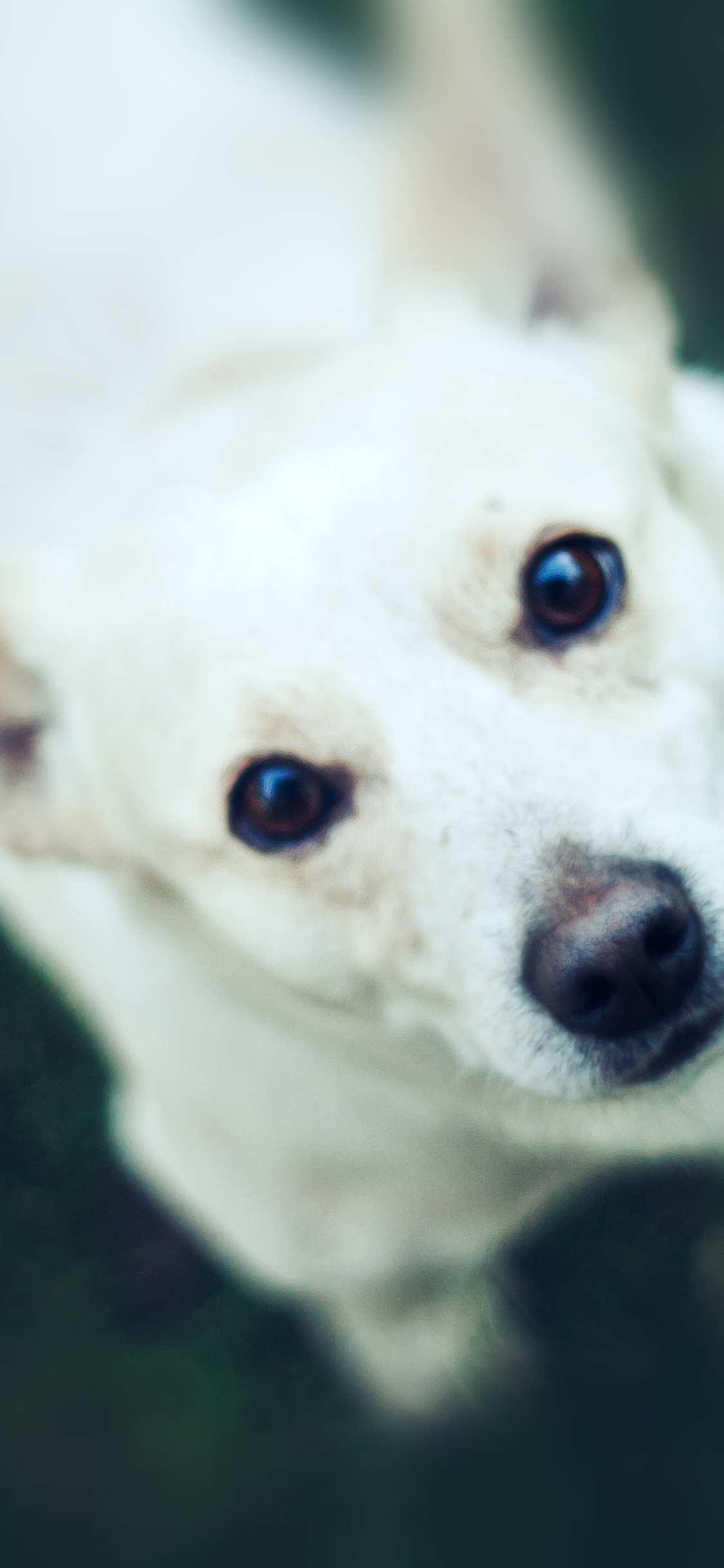 iPhoneXpapers.com-Apple-iPhone-wallpaper-mt72-doggy-watching-white-animal-love