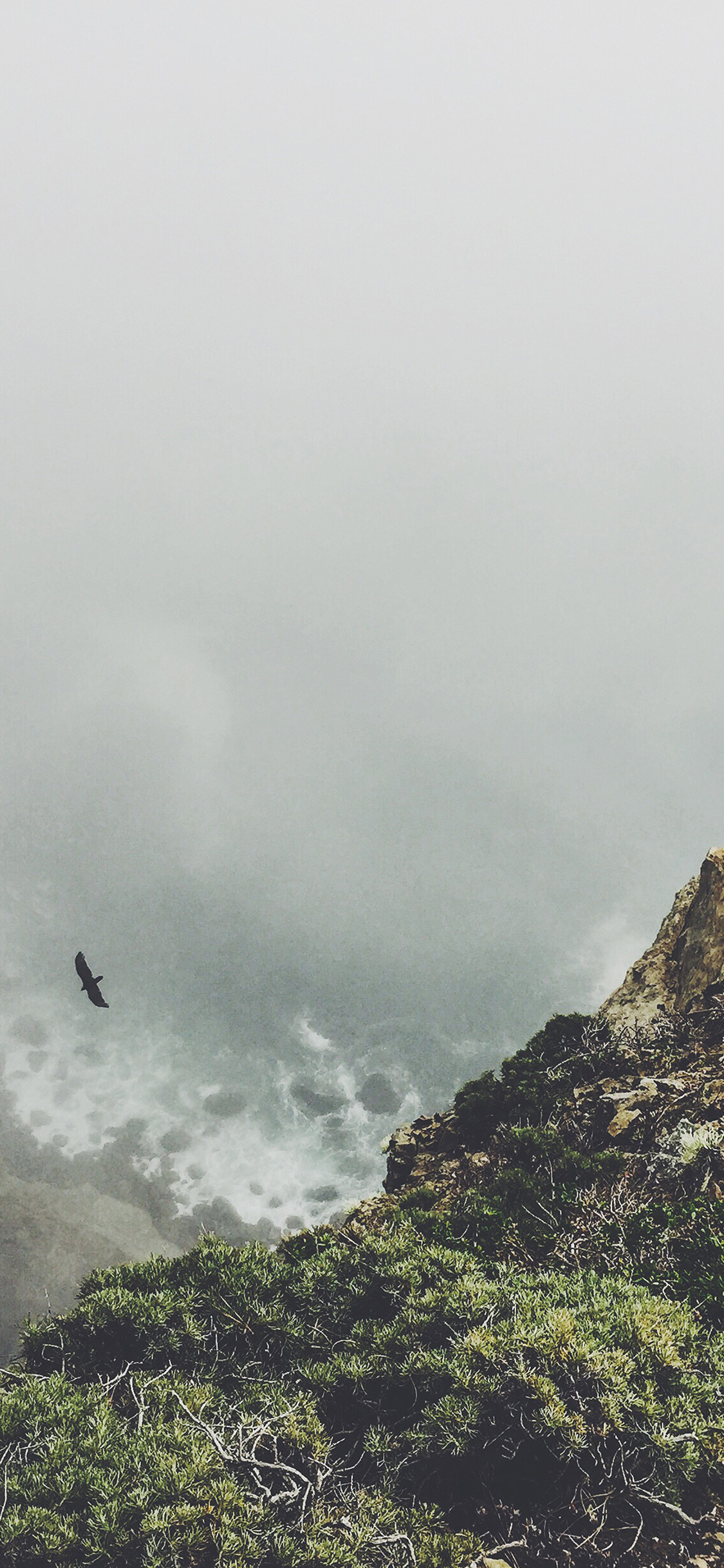 iPhoneXpapers.com-Apple-iPhone-wallpaper-mt79-mountain-bird-cliff-animal-fog-cloud