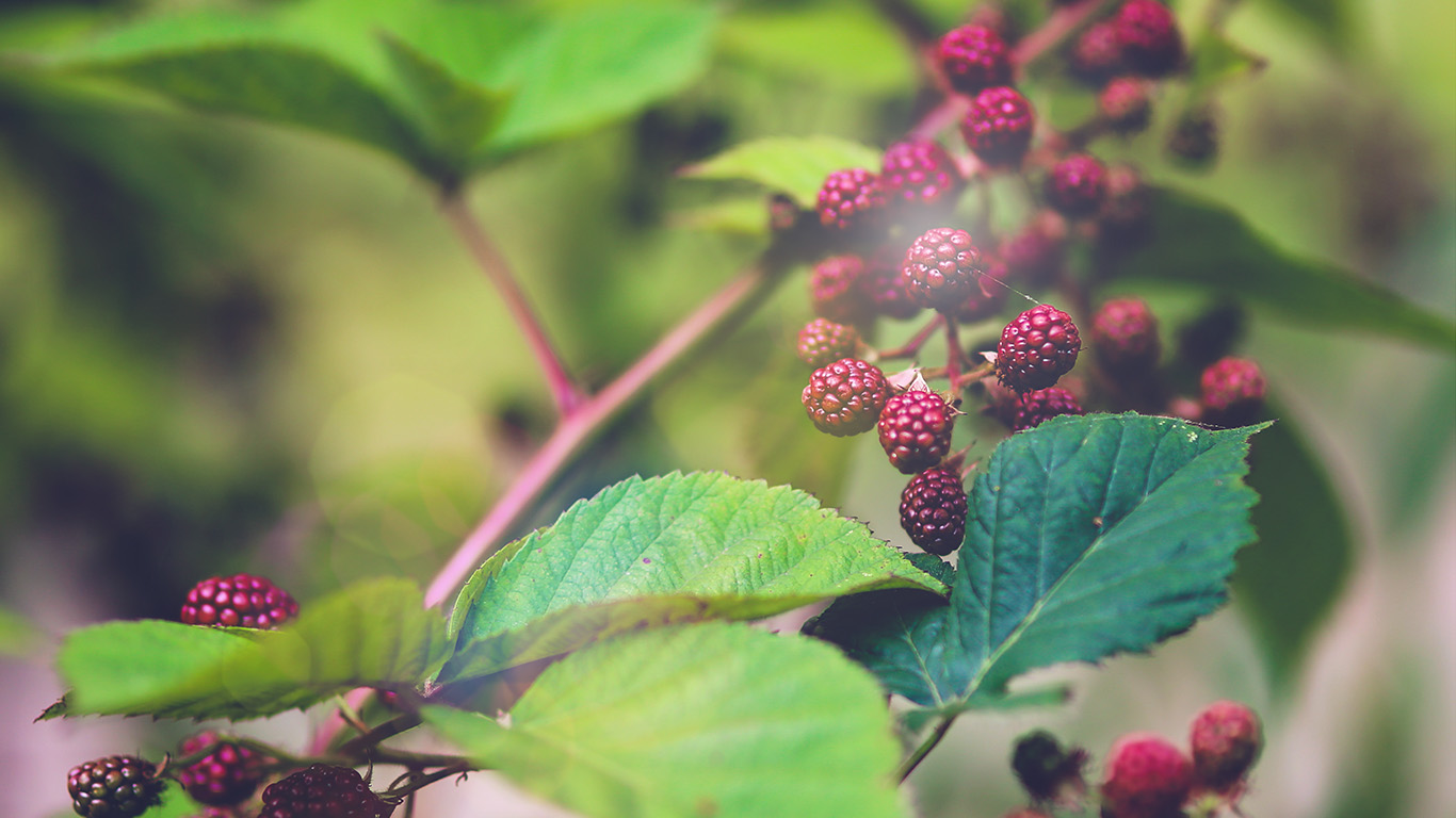 desktop-wallpaper-laptop-mac-macbook-air-mt83-red-berry-bush-nature-flower-bokeh-light-wallpaper
