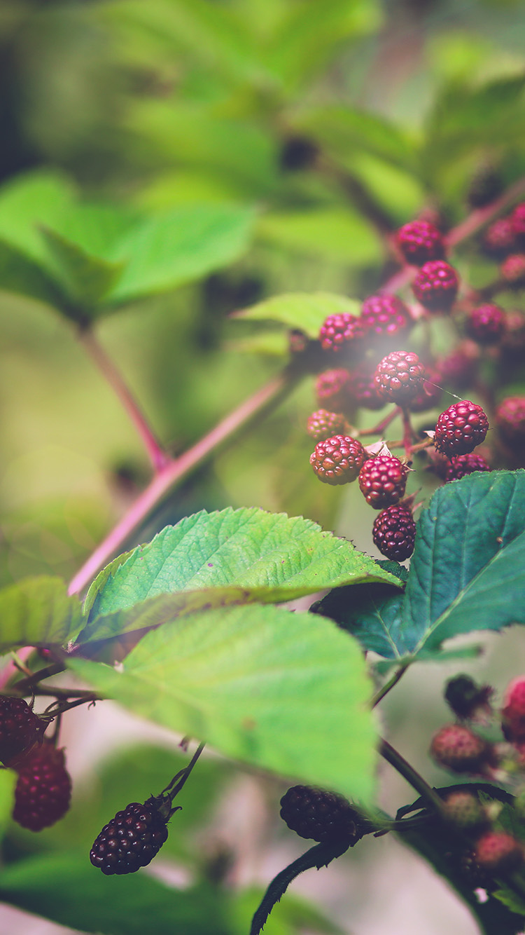 iPhone6papers.co-Apple-iPhone-6-iphone6-plus-wallpaper-mt83-red-berry-bush-nature-flower-bokeh-light