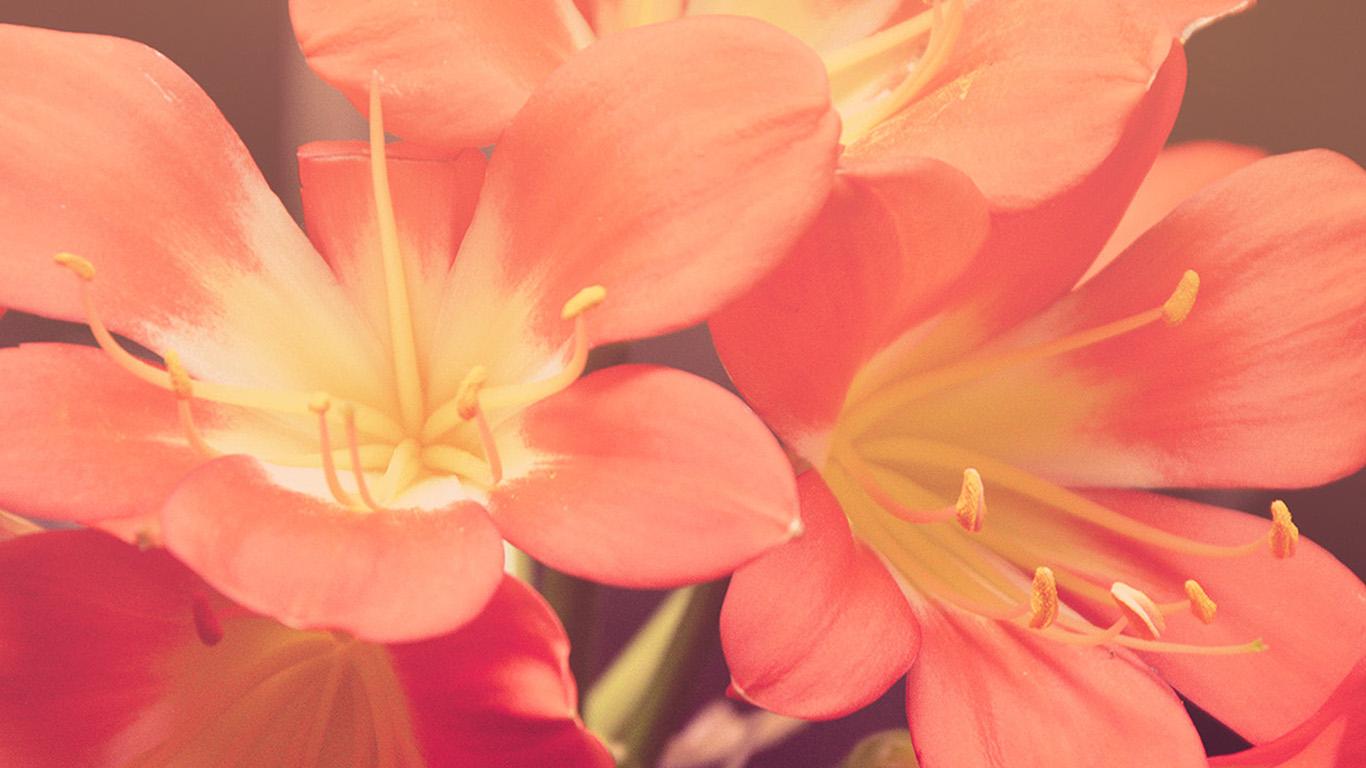 desktop-wallpaper-laptop-mac-macbook-airmt84-flower-red-nature-yellow-blossom-wallpaper