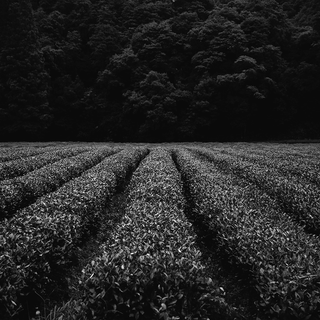 android-wallpaper-mt87-farm-dark-bw-nature-flower-leaf-tree-wallpaper