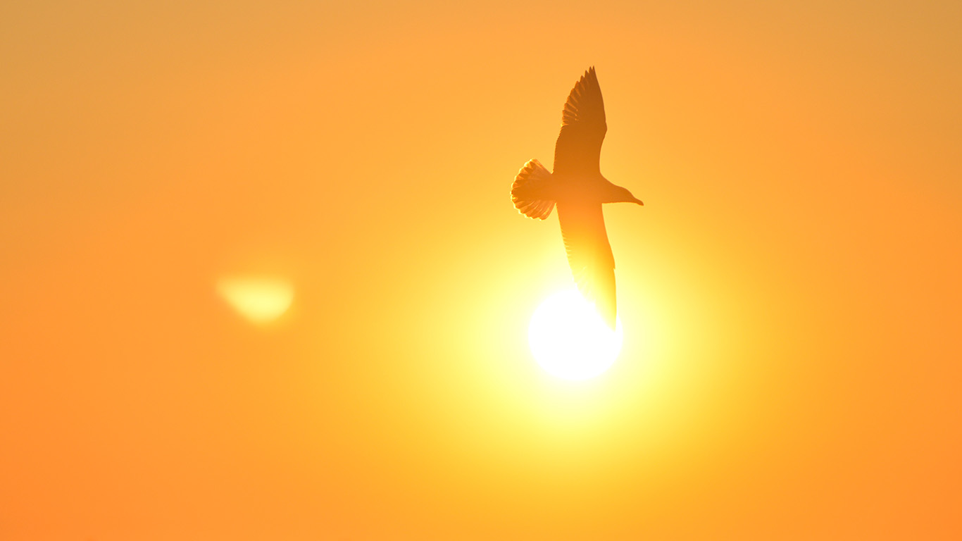 desktop-wallpaper-laptop-mac-macbook-airmt91-sunset-bird-red-sea-gal-wallpaper