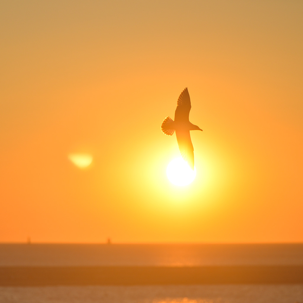 android-wallpaper-mt91-sunset-bird-red-sea-gal-wallpaper