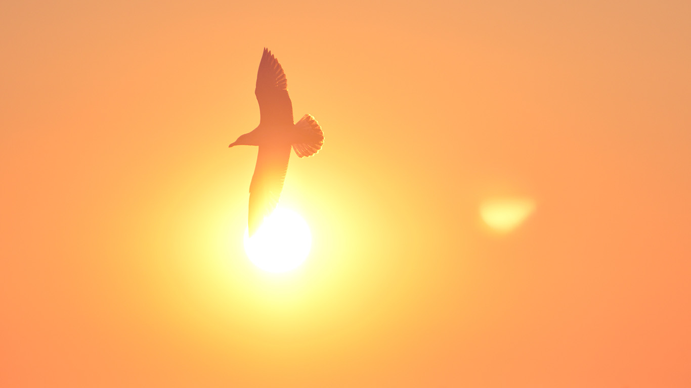 desktop-wallpaper-laptop-mac-macbook-air-mt92-sunset-bird-pink-sea-gal-wallpaper