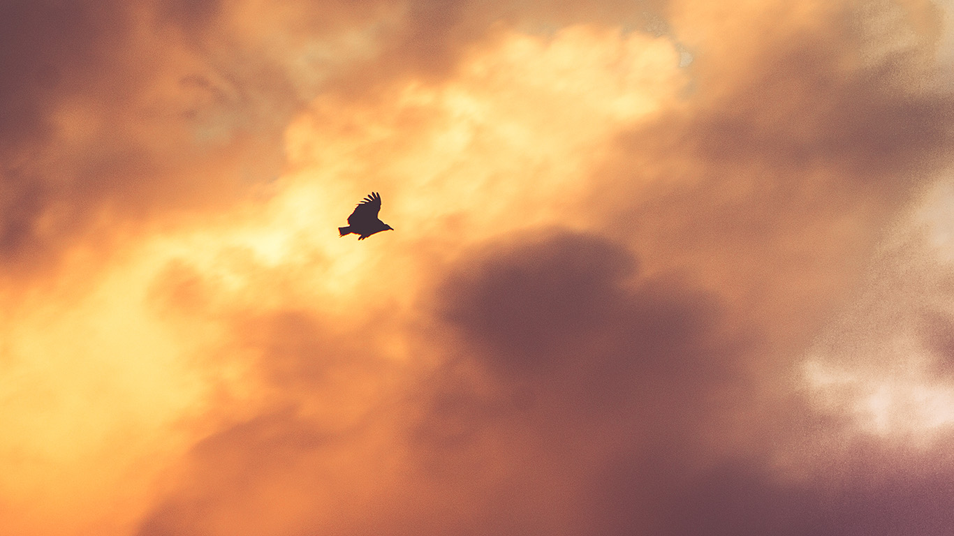 desktop-wallpaper-laptop-mac-macbook-airmu07-bird-fly-sky-clouds-red-sunset-nature-animal-wallpaper