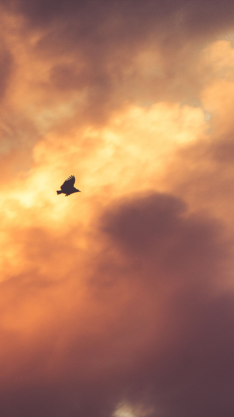 iPhone6papers.co-Apple-iPhone-6-iphone6-plus-wallpaper-mu07-bird-fly-sky-clouds-red-sunset-nature-animal