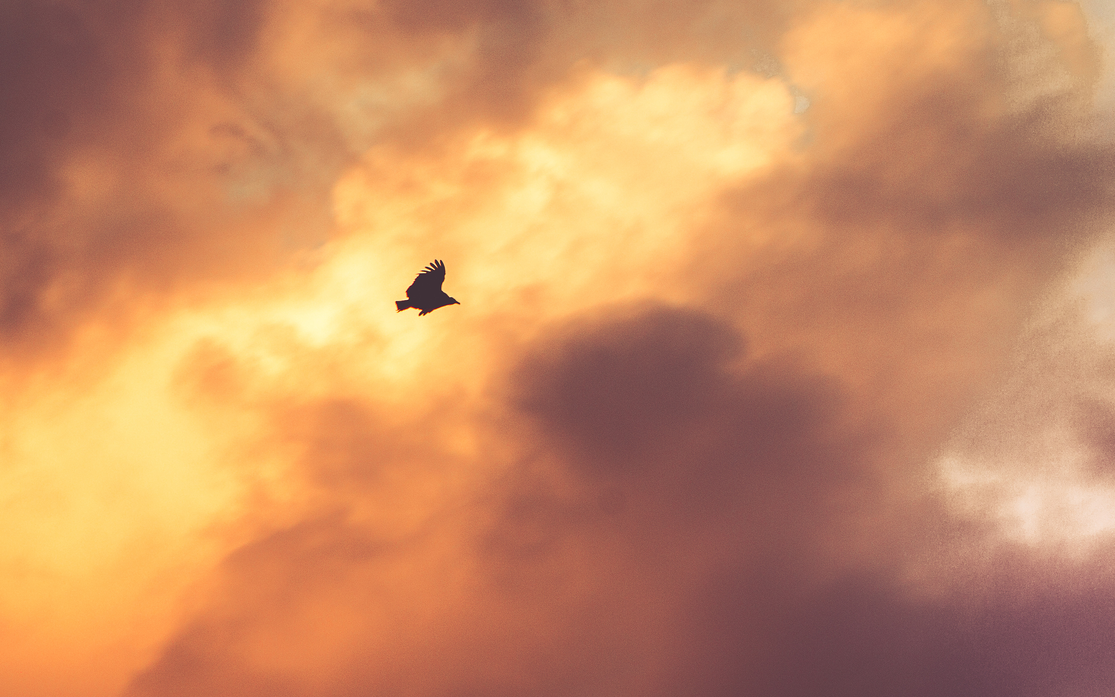 mu07-bird-fly-sky-clouds-red-sunset-nature-animal - Papers.co