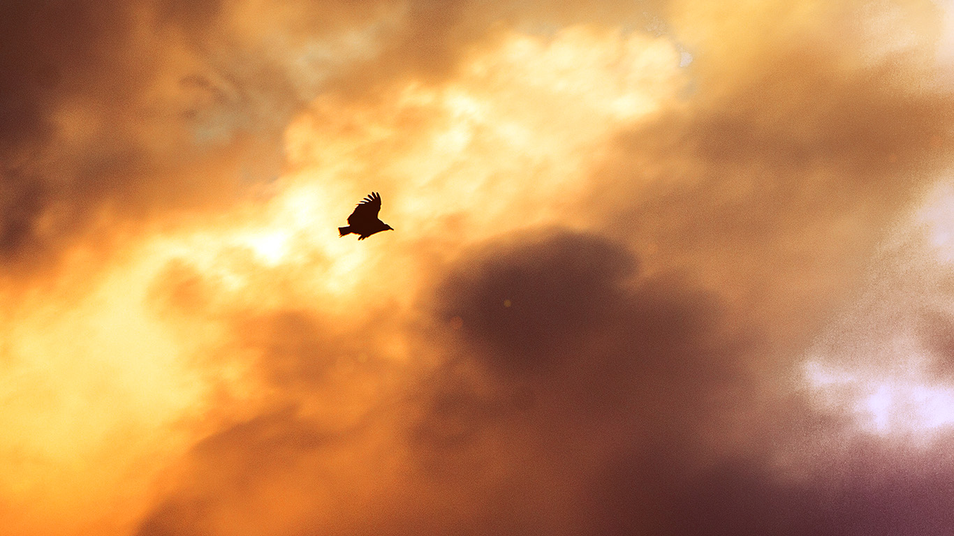 desktop-wallpaper-laptop-mac-macbook-air-mu08-bird-fly-sky-clouds-red-sunset-nature-animal-flare-wallpaper
