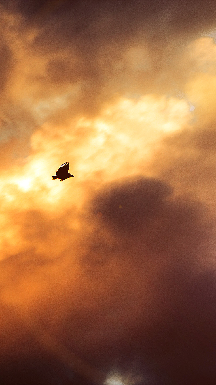 iPhone6papers.co-Apple-iPhone-6-iphone6-plus-wallpaper-mu08-bird-fly-sky-clouds-red-sunset-nature-animal-flare