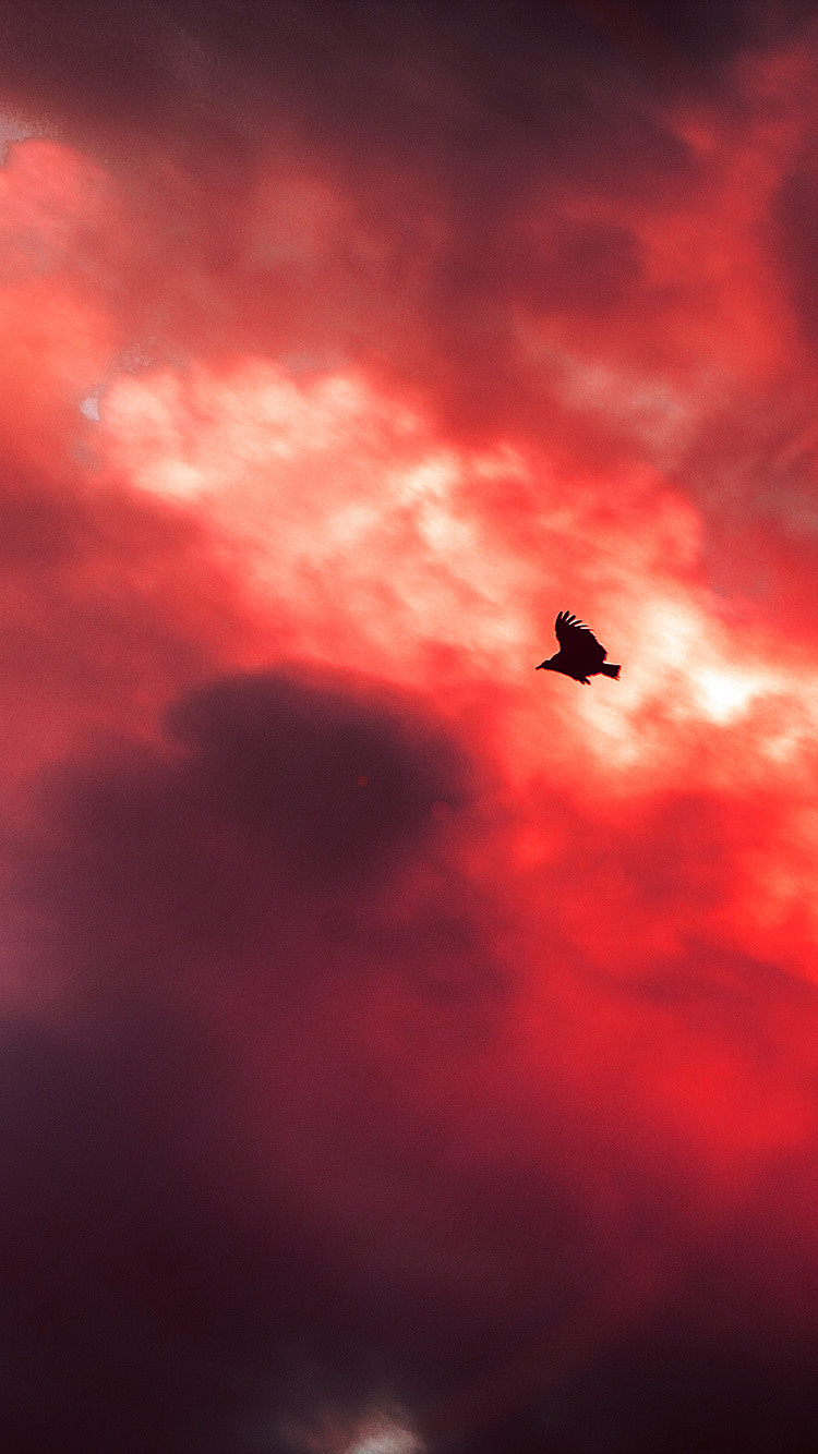 iPhone6papers.co-Apple-iPhone-6-iphone6-plus-wallpaper-mu09-bird-fly-sky-clouds-red-sunset-fire-nature-animal