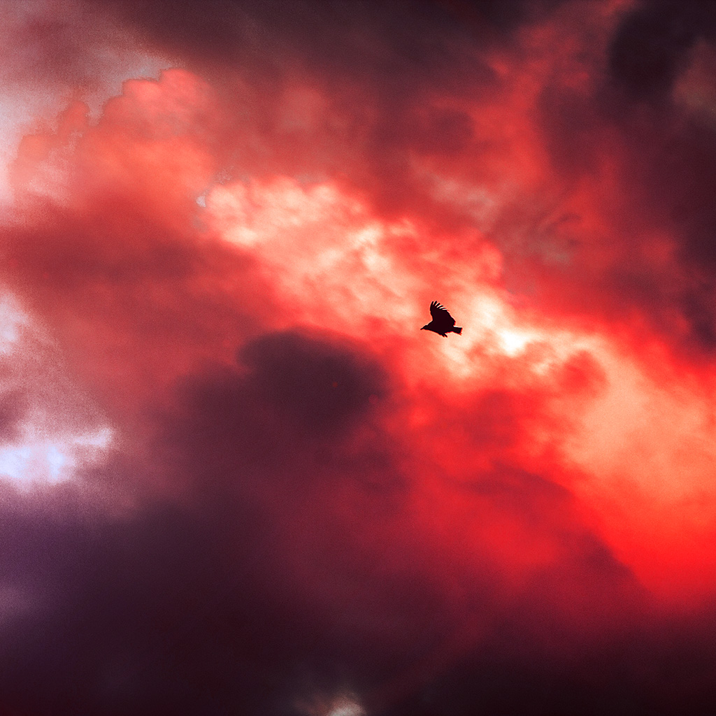 android-wallpaper-mu09-bird-fly-sky-clouds-red-sunset-fire-nature-animal-wallpaper