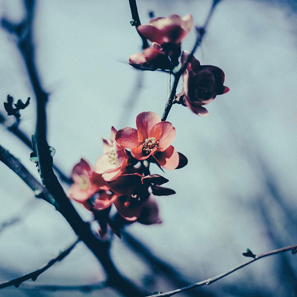 iPapers.co-Apple-iPhone-iPad-Macbook-iMac-wallpaper-mu10-flower-nostalgia-tree-spring-blossom-nature-wallpaper