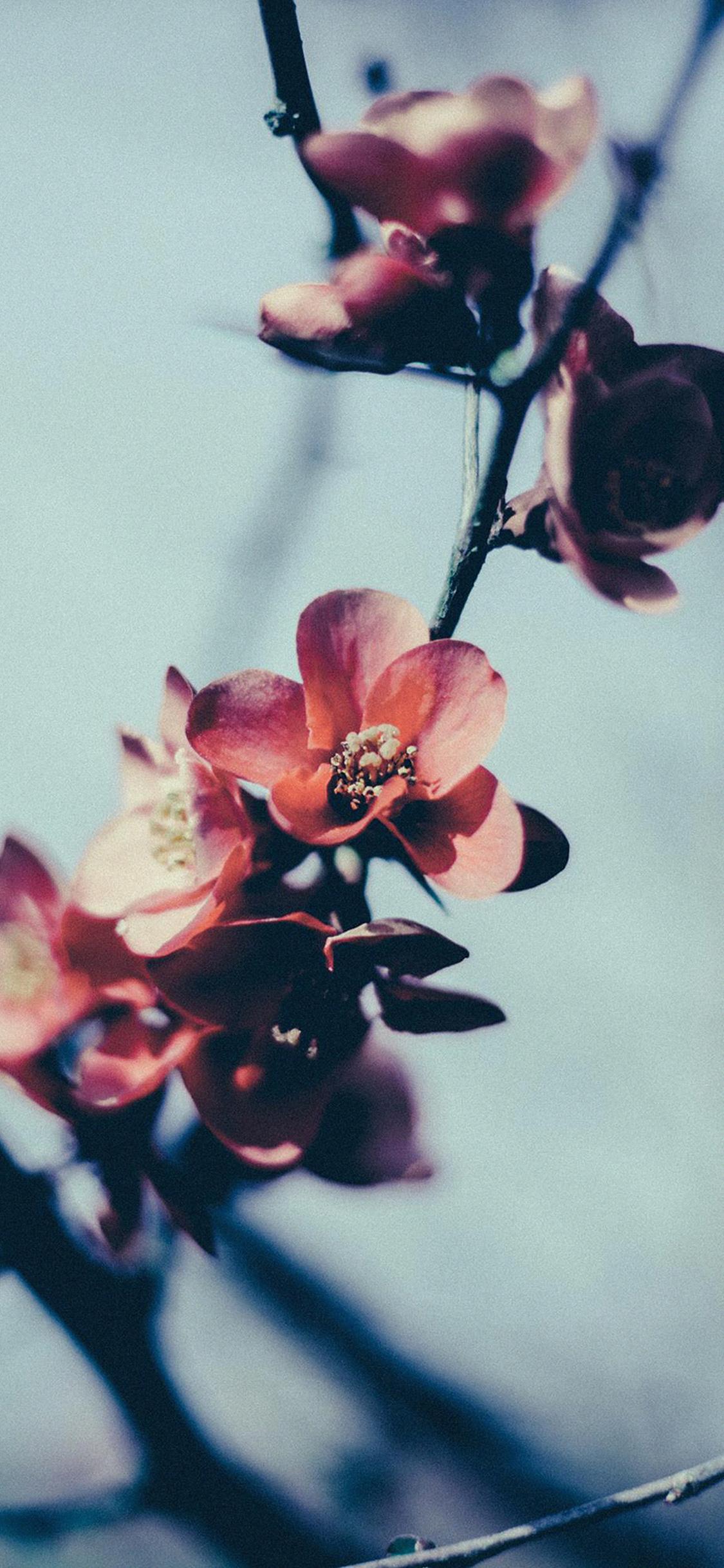 iPhoneXpapers.com-Apple-iPhone-wallpaper-mu10-flower-nostalgia-tree-spring-blossom-nature