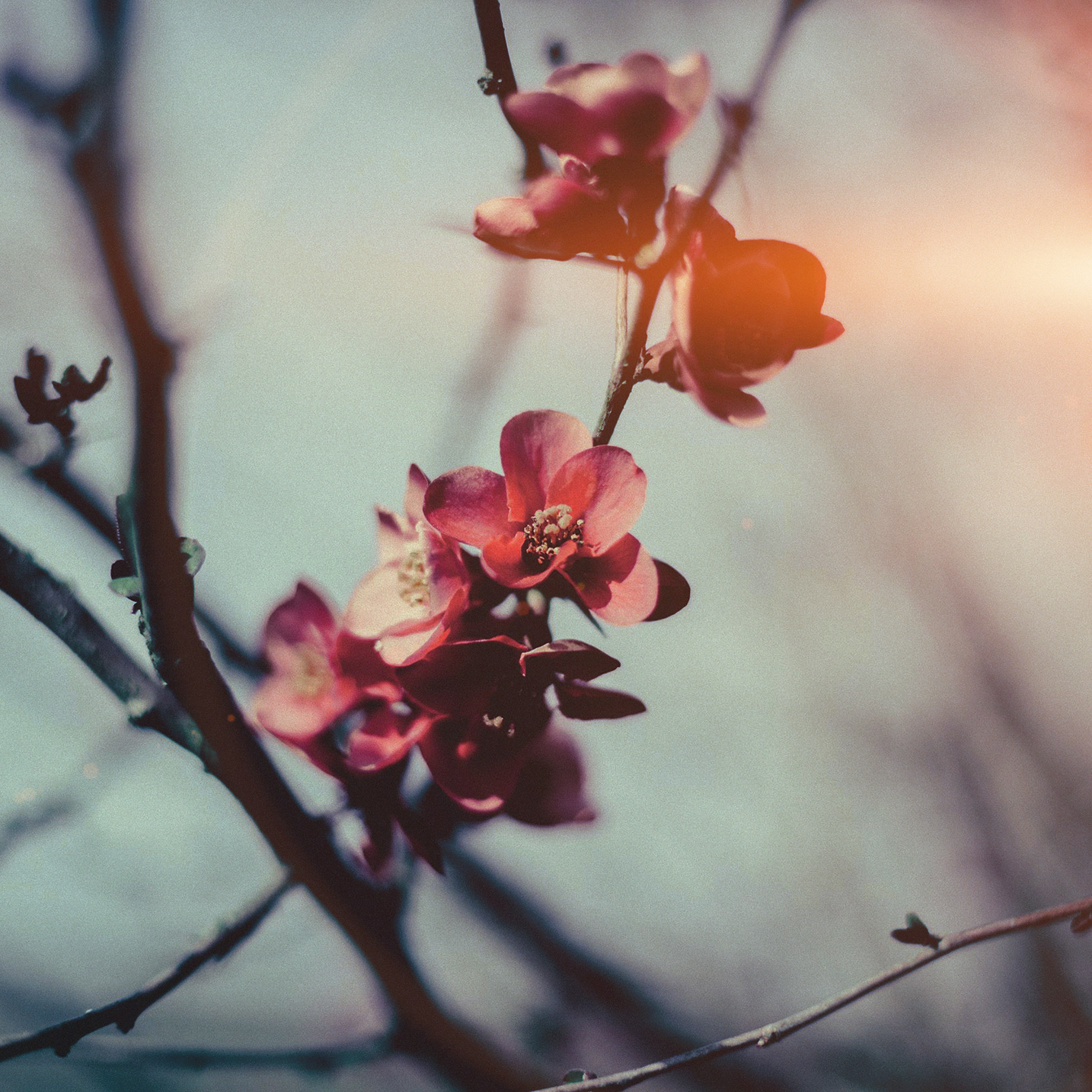 29+ Wallpaper Spring Blossom Flowers Images