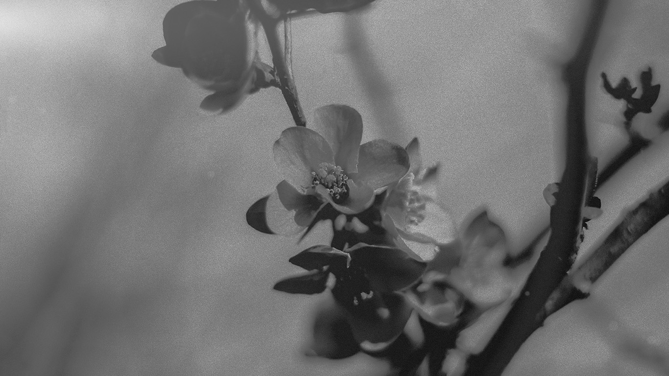 wallpaper-desktop-laptop-mac-macbook-mu12-flower-nostalgia-tree-spring-blossom-nature-bw-dark