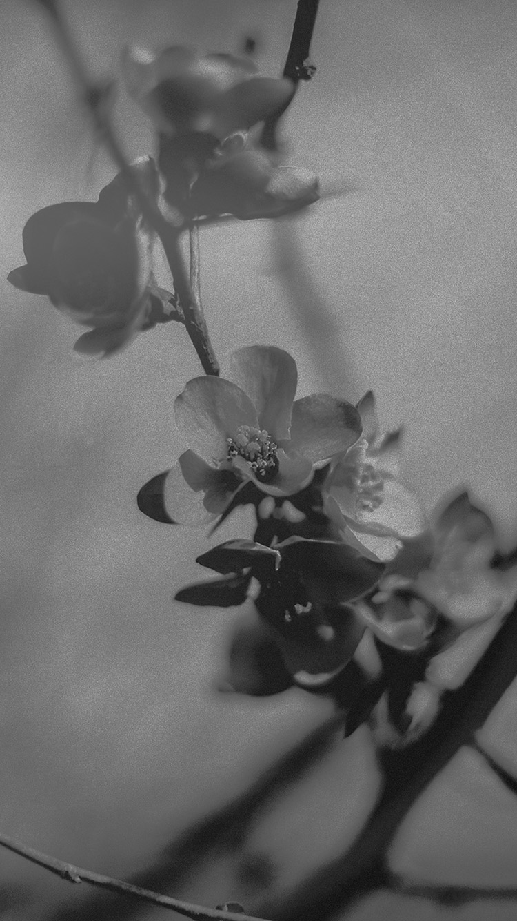 iPhone7papers.com-Apple-iPhone7-iphone7plus-wallpaper-mu12-flower-nostalgia-tree-spring-blossom-nature-bw-dark