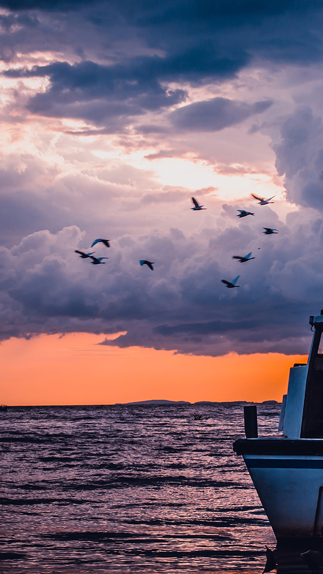 freeios8.com-iphone-4-5-6-plus-ipad-ios8-mu51-sea-sunset-birds-sky-ocean-ship-nature-blue