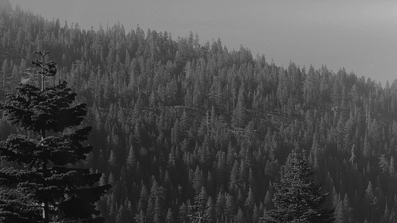 desktop-wallpaper-laptop-mac-macbook-airmu52-tree-wood-mountain-nature-dark-bw-wallpaper