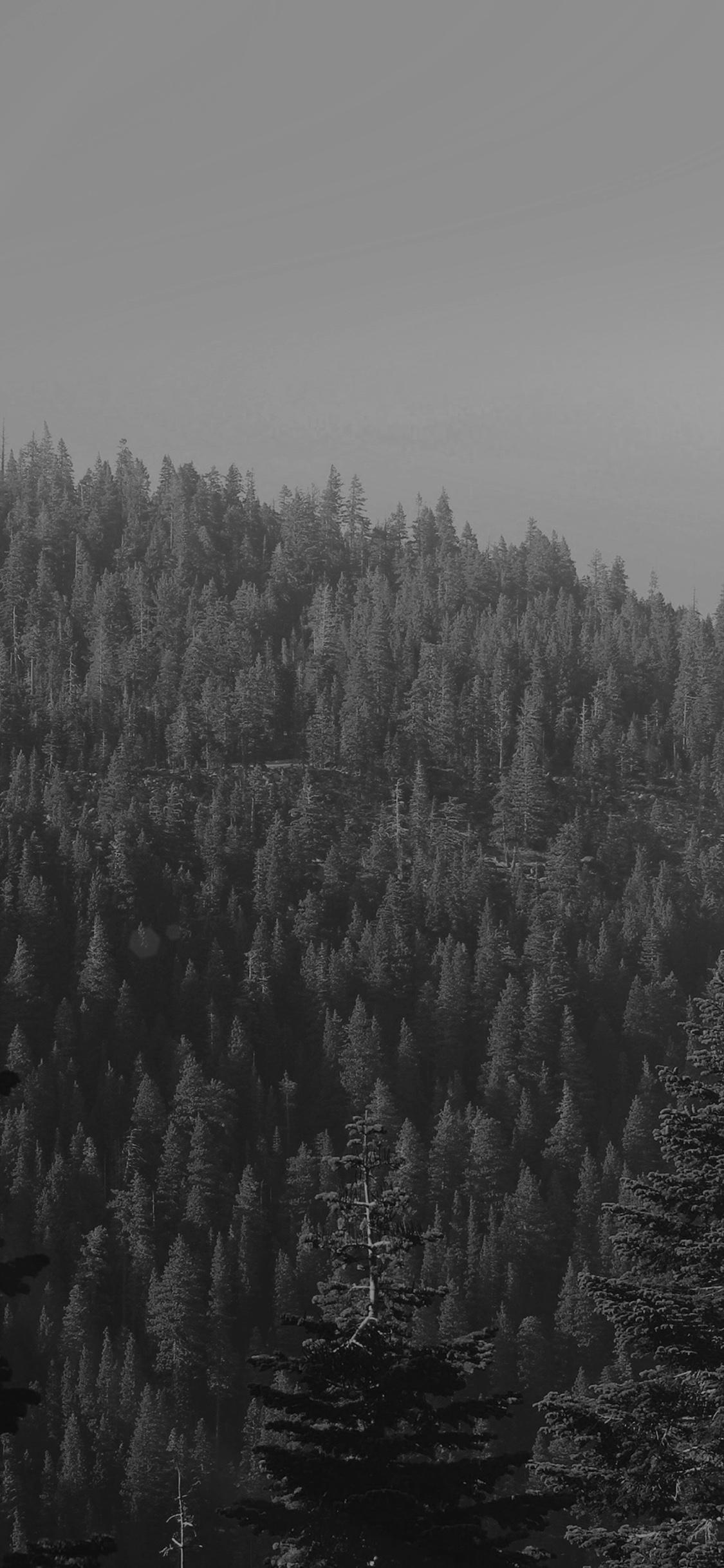 iPhoneXpapers.com-Apple-iPhone-wallpaper-mu52-tree-wood-mountain-nature-dark-bw