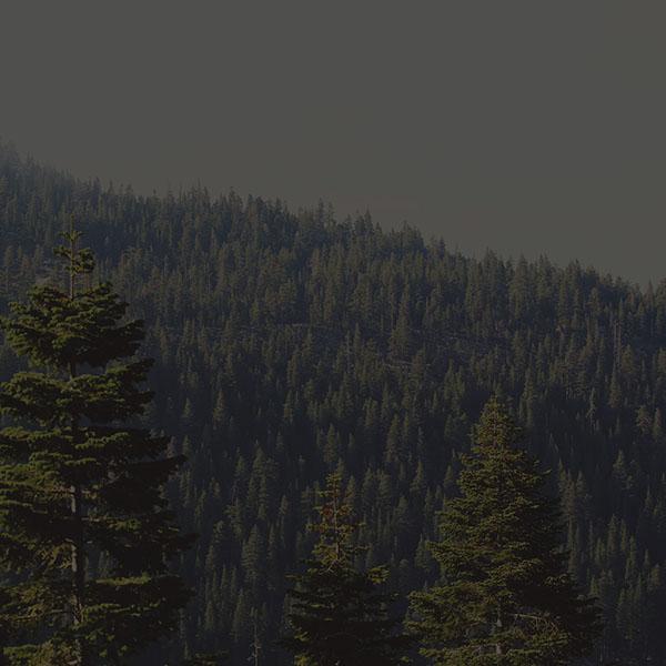 iPapers.co-Apple-iPhone-iPad-Macbook-iMac-wallpaper-mu53-tree-wood-mountain-nature-dark-green-wallpaper