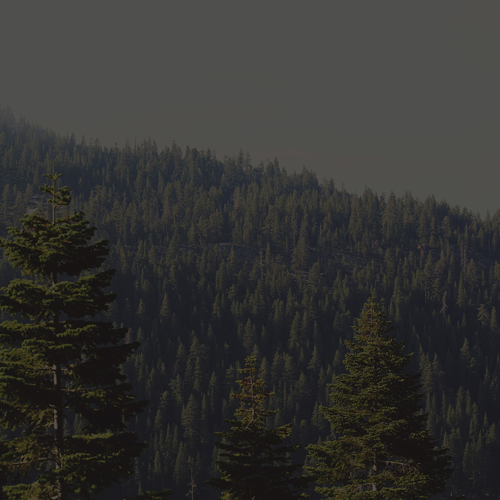 android-wallpaper-mu53-tree-wood-mountain-nature-dark-green-wallpaper